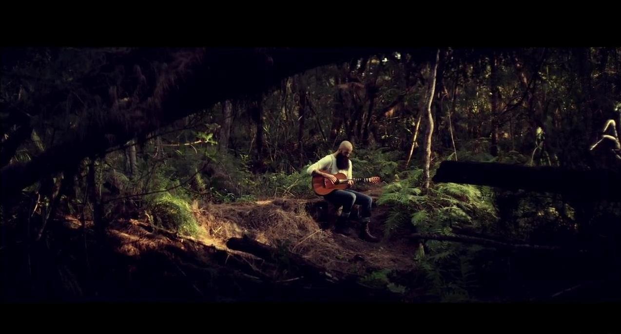 video a tema boschi