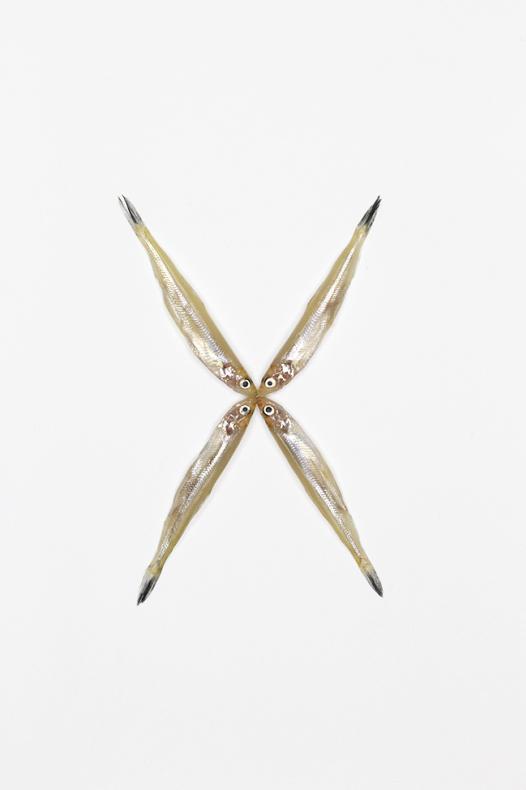 moniquegoossens-typography-fish-X-650