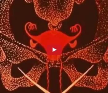 Capibara – D (feat. Videodreams) / Esclusiva